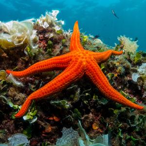 Mucoviscidose et étoiles de mer: l'innovation de ManRos Therapeutics